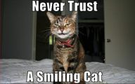 Funny Pictures With Captions 19 Free Hd Wallpaper