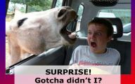 Funny Pictures With Captions 22 High Resolution Wallpaper