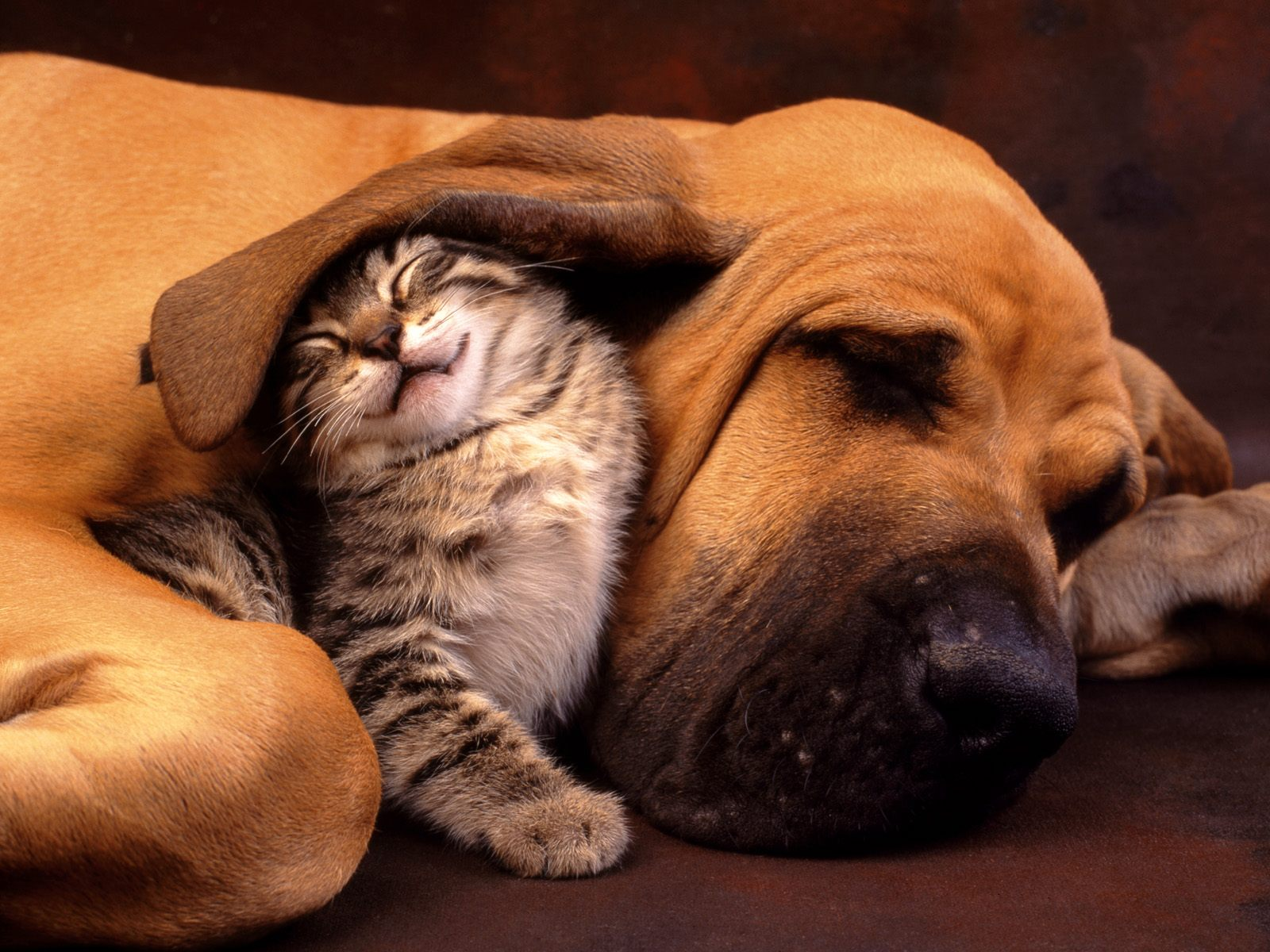 Funny And Cute Animals 39 Widescreen Wallpaper
