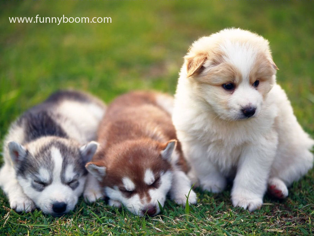 Funny And Cute Dog Pictures 27 Cool Hd Wallpaper Funnypicture Org
