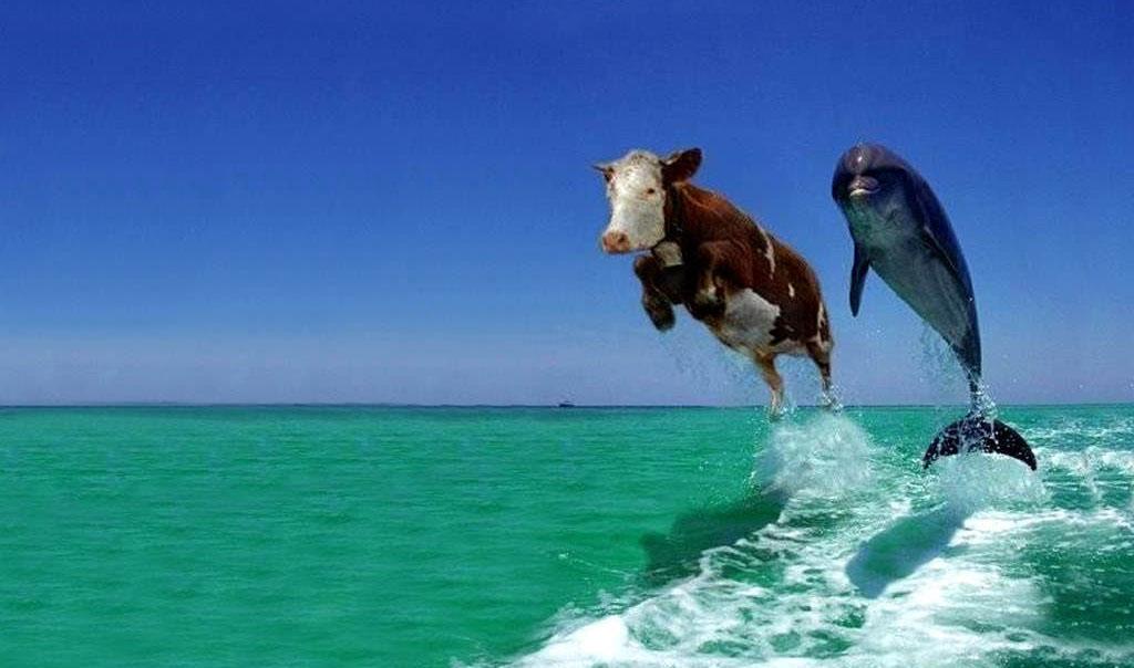 Funny Weird Pics 20 Desktop Wallpaper Funnypicture Org