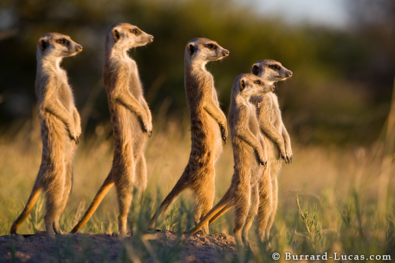 funny african animals 46 hd wallpaper - Collection of funny african wildlife photos
