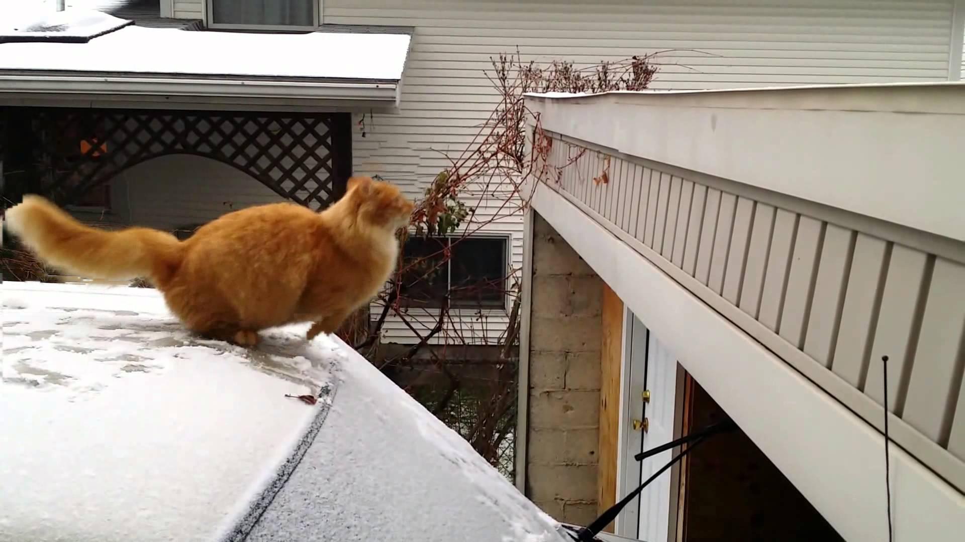 Кошка падает гифка