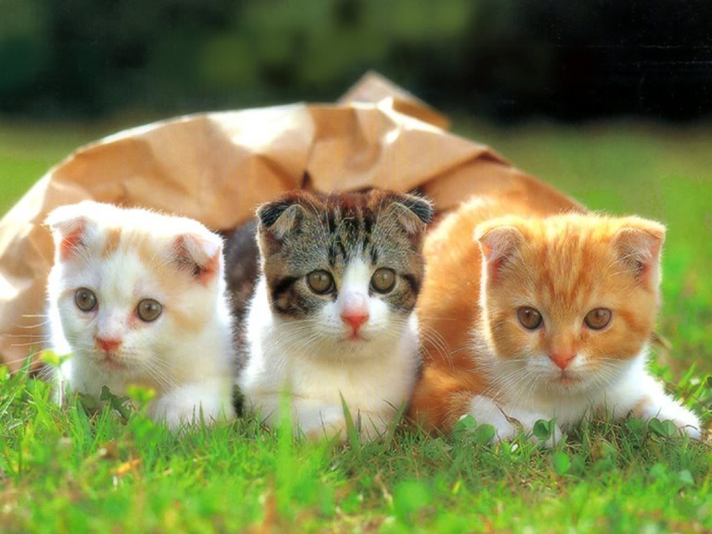 Funny Baby Cats 18 Background Funnypicture Org