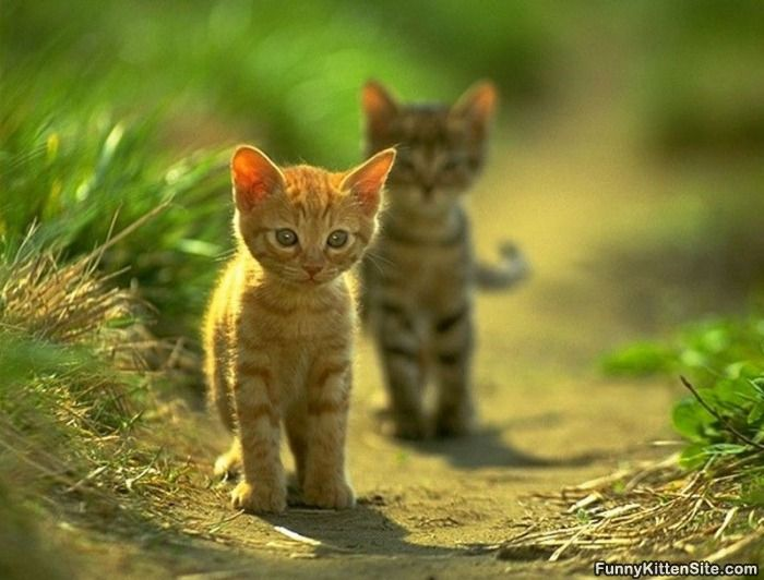 Funny Baby Cats 24 Background Wallpaper Funnypicture Org