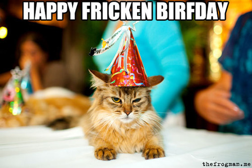 Funny Birthday Cat 6 Background Wallpaper Funnypicture Org