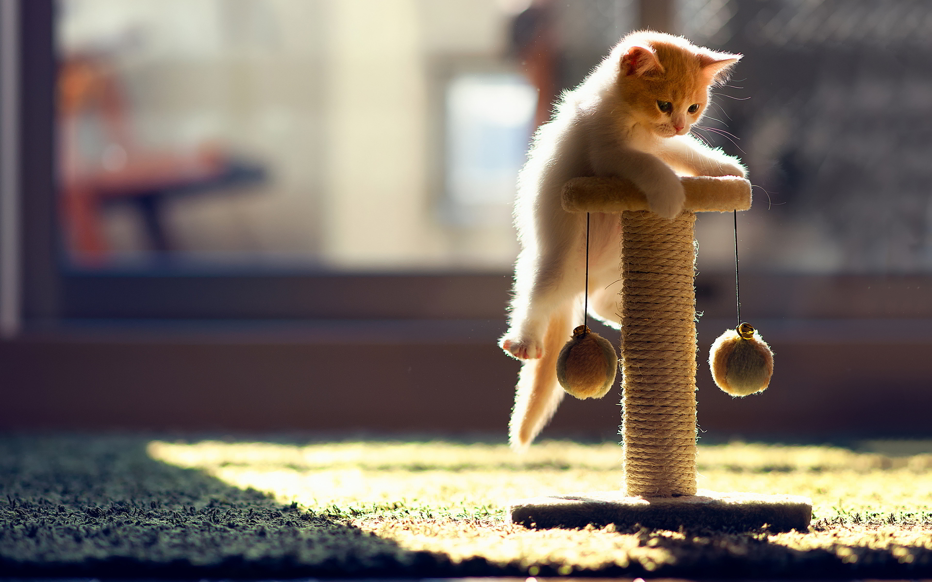 funny cat playing 50 desktop wallpaper - funnypicture