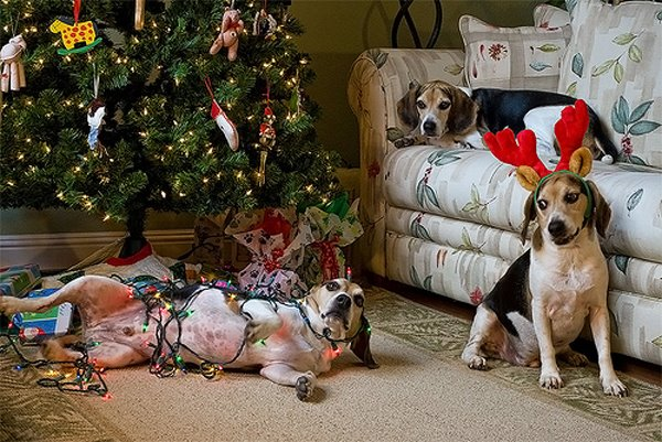 funny christmas dogs 19 wide wallpaper