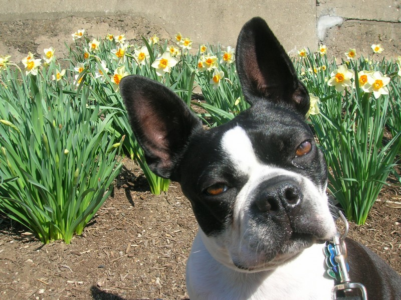 Funny Dog Breed Combinations